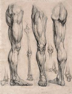 【基础】【素描】骨骼&人体结构(via:Акад... 来自原画人官方微博 - 微博