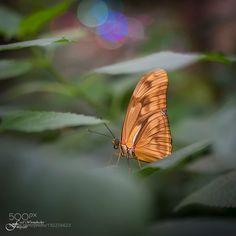 Butterfly on a leaf by fredwormsbecher via http://ift.tt/2janst3