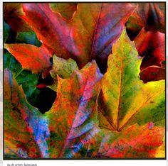 ¡Cuanto colorido en unas simples hojas! Como para pintar un cuadro con ellas ¡hermosas!