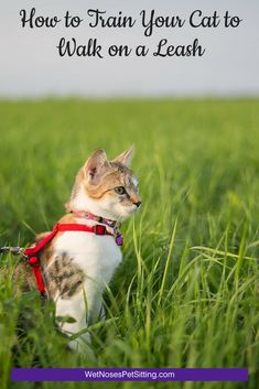 For outgoing and active cats, walking on a leash can be a wonderful activity. Getting them started is the biggest step! Wet Noses Pet Sitting Fort Collins, Loveland, Pet Sitter, Dog Walker, Cat Sitter #cat #walk #leash