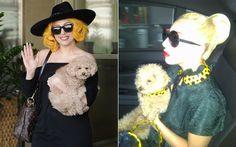 Fozzy é o poodle fofinho da Lady Gaga!