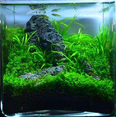 Image result for aquarium nano cube