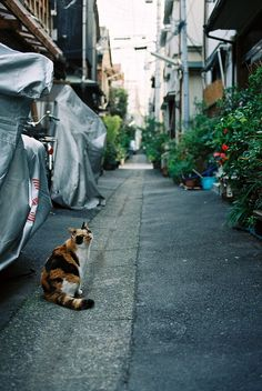 Side street in Tokyo, love the cat Japan Village, Japanese Lifestyle, Cat City, Tokyo, Alley Cat, Curious Cat, Cat Aesthetic, Japanese Streets, All About Cats