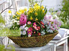 Basket with Narcissus Tete a Tete Bellis Viola cornuta Chionodoxa Primula Garden Basket, Dish Garden, Basket Flower Arrangements, Floral Arrangements, Deco Floral, Arte Floral, Easter Flowers, Spring Flowers, Daisy Flowers