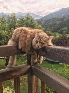 Cute Overload: Internet`s best cute dogs and cute cats are here. Aww pics and adorable animals. I Love Cats, Crazy Cats, Cute Cats, Adorable Kittens, Pretty Cats, Beautiful Cats, Beautiful Pictures, Happy Pictures, Animals And Pets