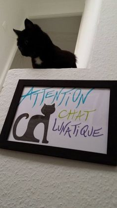 « Be careful, moody cat »