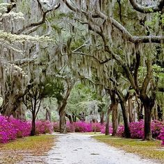 Savannah, Georgia ♥-another fav spot of mine!