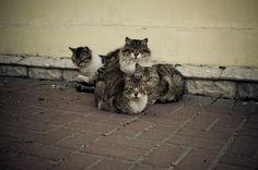 Gangs of NewYork by Roman Chupryna on 500px