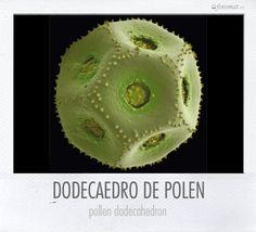Dodecaedro de plonen. Fotografía microscópica de Rob Kesseler.