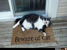Lustige Tiere #3 #1  Do beware! Lol!