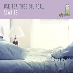 Tea tree oil uses are amazing! Discover tea tree oil benefits and the uses for tea tree oil that will have you stockpiling it. Homemade Essential Oils, Young Living Essential Oils, Tea Tree Face Wash, Diy Body Wash, Tea Tree Oil Uses, Coconut Oil For Face, Oil Benefits, Oils For Skin, Carpet Steamer