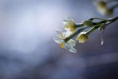 sign of spring by Masaru Kuroda on 500px