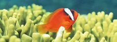 Si en algún momento te sientes solo, piensa en este pez, está rodeado de peces como él pero no puede comunicarse.  Los pequeños momentos en la vida son los que nos hacen seguir disfrutando de ella.
