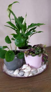 Van Stekkie tot Plant: Plantjes in zomerse sferen