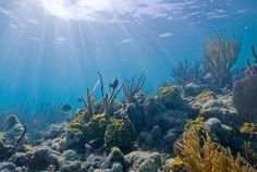 In honor of National Park Week, take a trip down to Florida's Biscayne National Park.   Biscayne National Park is home to Biscayne Bay, the world's 3rd largest coral reef!