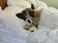 """Someone at #imgur said, """"My dog got lonely so we gave him a panda to snuggle with."""""""