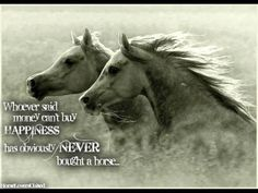 who ever said you cant by happiness with money obviously has never bought a horse.. love that quote