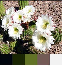 Cactus Flower Color Scheme