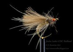Jindra Lacko CDC Redhead - David Stenström