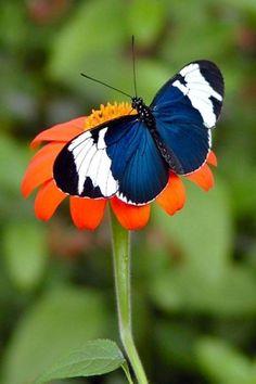 Butterfly by mmanuella