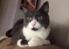Polydactyl or 'Hemingway cats' are felines born with extra toes. Learn more facts about these special kitties and see photos of our readers' polydactyl kitties.
