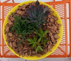 Steel Life's Not So Mellow #Yellow Mod Dish planted with #succulents and top dressed with cork.  www.shopsteellife.com