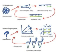 polymerase chain reaction lab report biology essay Polymerase chain reaction making dna accessible most people in molecular biology today are not old enough to remember pre-pcr but try to do your job without it, and you will see what a difference that simple little technique has made.