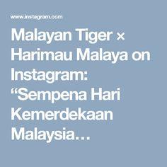 """Malayan Tiger × Harimau Malaya on Instagram: """"Sempena Hari Kemerdekaan Malaysia…"""