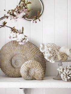 South Shore Decorating Blog: I love amonites. I have a few myself.