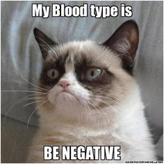 Photo: If only Grumpy Cat could donate blood, too.