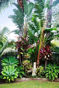 We were influenced by the many lush tropical gardens in our coastal neighbourhood and overseas, too, she says. Tropical plants are also amazingly hardy. It also helps that Bilgola is full of red volcanic soil so everything grows really well! - Jolene's Gardening #tropical_garden_landscape