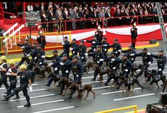 Parade in Lima - Peru #dobermans