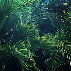 I've been a little quiet around here lately mainly because this has been my backyard for the week and I haven't had the desire to pick up my cell phone. Resetting for the new year to come - Enjoying long days at the beach and warm nights on the patio in our hidden-jungle vacation home. Hope everyone is enjoying their holidays as much as I am!