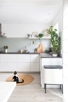 Green and white Ikea kitchen with concrete slab from . - Green and white Ikea kitchen with concrete slab from … # concrete - Kitchen Soffit, Green Kitchen Cabinets, Kitchen Colors, Concrete Kitchen, Concrete Slab, Black Cabinets, Kitchen Slab, Kitchen Walls, Nice Kitchen
