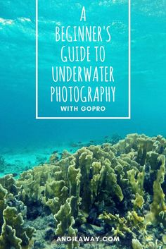 How to get the best underwater footage while scuba diving with a GoPro. Tips on a simple setup and what accessories to pack for maximum diving awesomeness. Best Underwater Camera, Underwater Photos, Underwater Photography, Best Camera For Photography, Photography Tips, Travel Photography, Camera Shy, Camera Phone, Camera Case