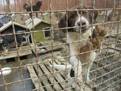 Explore this interactive image: Serbia's Forgotten Paws...and how we can all help by Ralph's Life