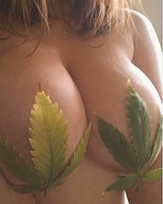 Big tits and weed