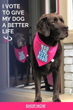 Are you ready to WAG THE VOTE? Get your dog ready for Election 2020 with this special edition PINK bandana. It's giving us major Legally Blonde 2 vibes! Elle Woods would definitely order this for Bruiser! Wag the Vote 2020 was started as a way to raise awareness and get pet parents registered to vote. Want to get involved? Head on over to @wagthevote2020 on Instagram. Elle Woods, Legally Blonde, Find Pets, Mom Blogs, Dog Friends, Dog Mom, Live For Yourself, Your Dog, Dog Lovers