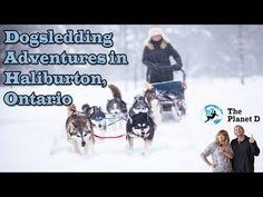 Dogsledding Adventures in Haliburton, Ontario America And Canada, North America, Adventure Awaits, Adventure Travel, Ontario Travel, Winter Destinations, Travel Videos, Outdoor Recreation, Lonely Planet