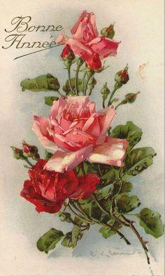Les roses de Catharina Klein - Photo de Les roses de C. Klein (peintre) (Cartes postales anciennes) - Mon jardin de roses anciennes