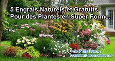 Il existe des engrais naturels et efficaces dont on n'a même pas idée. Découvrez 5 engrais gratuits que vos plantes vont adorer.  Découvrez l'astuce ici : http://www.comment-economiser.fr/engrais-naturels-gratuits-plante-en-forme.html?utm_content=buffer840af&utm_medium=social&utm_source=pinterest.com&utm_campaign=buffer