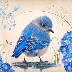 ideas for blue bird illustration drawings Bluebird Tattoo, Tattoo Bird, Tattoo Animal, Motifs Animal, Tier Fotos, Bird Drawings, Bird Pictures, Bluebirds, Art And Illustration