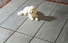 Auch der Hund macht es sich auf der Terrasse mit MAHORA Großdielen gemütlich. Hergestellt von braun-steine GmbH