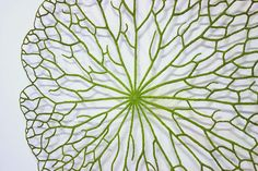 The Artwork of Meredith Woolnough