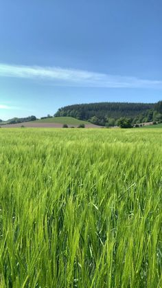 Walking through a barley field on a glorious spring day in South Shropshire, England Beautiful Photos Of Nature, Beautiful Nature Wallpaper, Amazing Nature, Beautiful Places, Nature Iphone Wallpaper, Image Nature, Nature Aesthetic, English Countryside, Nature Scenes