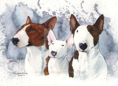 Commission, watercolor, 40 x 30 cm Pixie (red) and Marley (brindle) are adults standard bull terriers, while Blondie is a miniature bull terrier puppy !