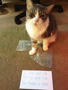 Cat Shaming  | Here Are 25 Of The Worst Cats In The World