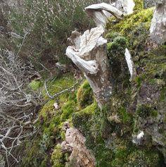 Stumpscape
