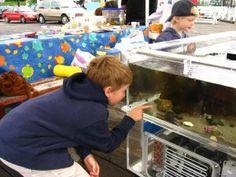 classroom aquarium grant info