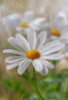 Just a Daisy. It was my Aunt Mary's favorite. I miss her everyday.